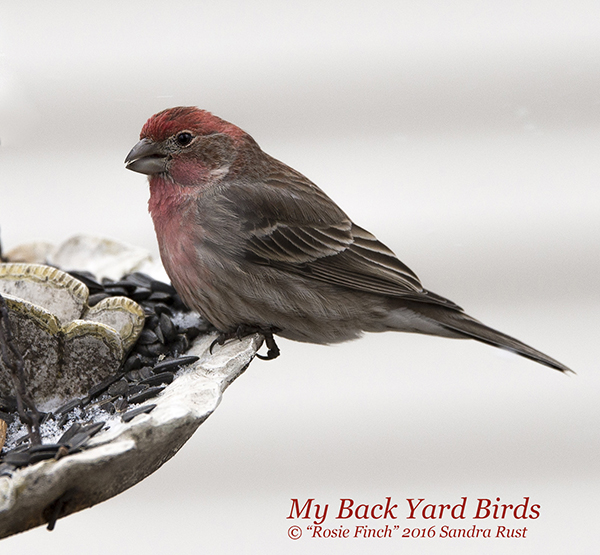 Attract Back Yard Song Birds